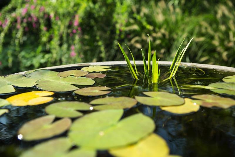 Plant 6-800x533.jpeg