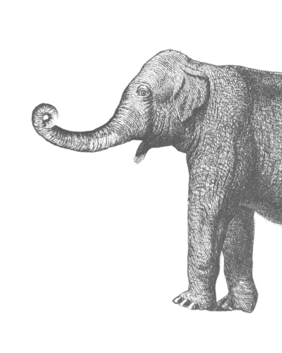 elephant_long.jpg
