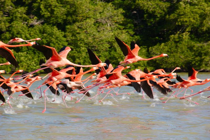 Flamingo Flock Up (c) Betty Stone