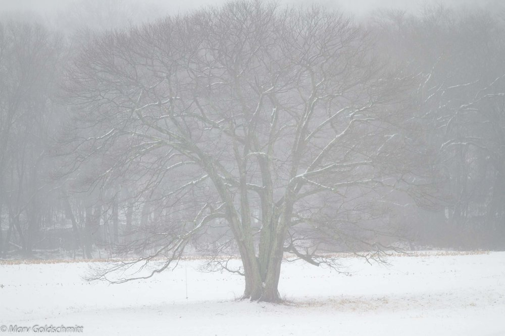 Foggy Remembrances  (c) Marv Goldschmitt