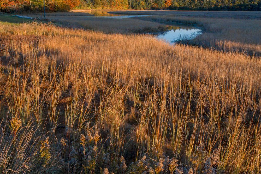 Falmouth Marsh