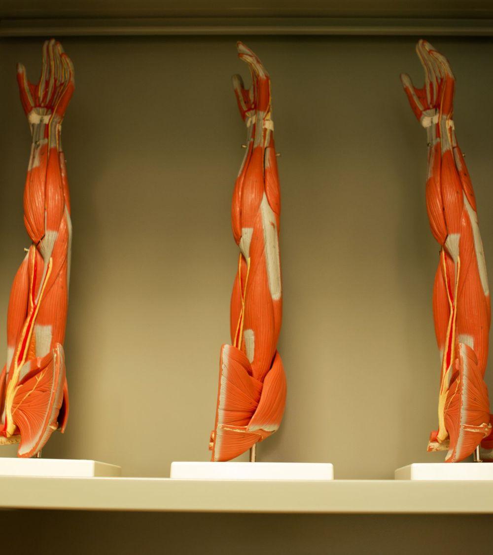 brazo anatomia_result.jpg