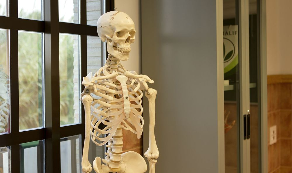 craneo anatomia blanco_result.jpg