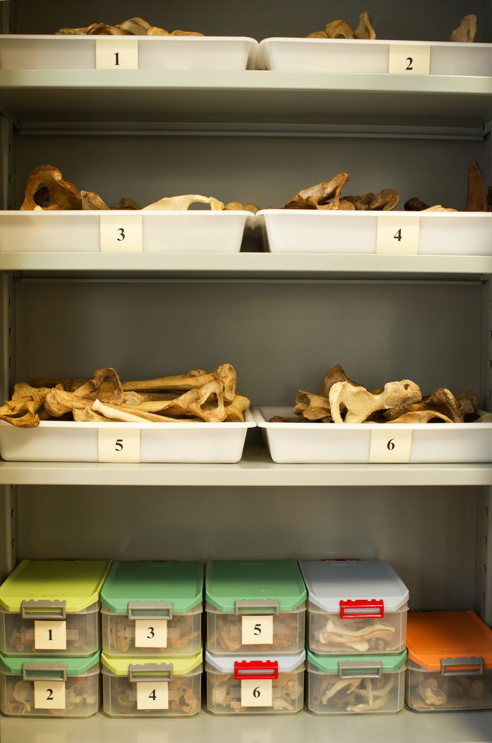 huesos anatomia 1_result.jpg