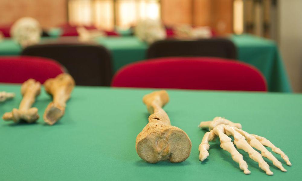 huesos arte mesa verde anatomia_result.jpg