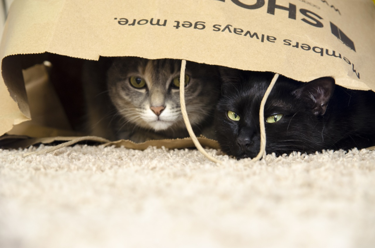 Cats in bags.