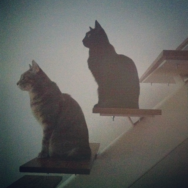They found their new perching spot.  #catsonstairs