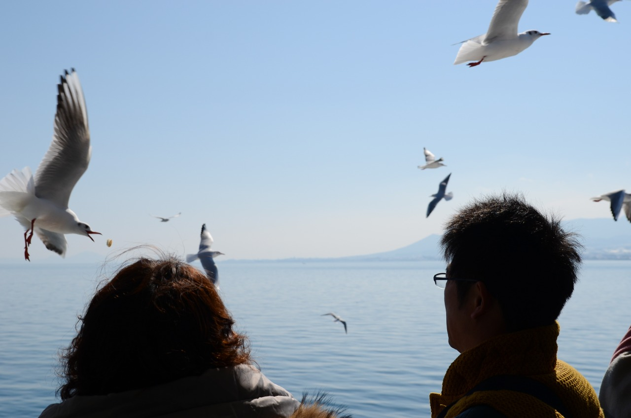 On the ferry to Unzen these seagulls followed us the whole way. Passengers were throwing bits of bread into the wind that the gulls were catching them in their beaks.