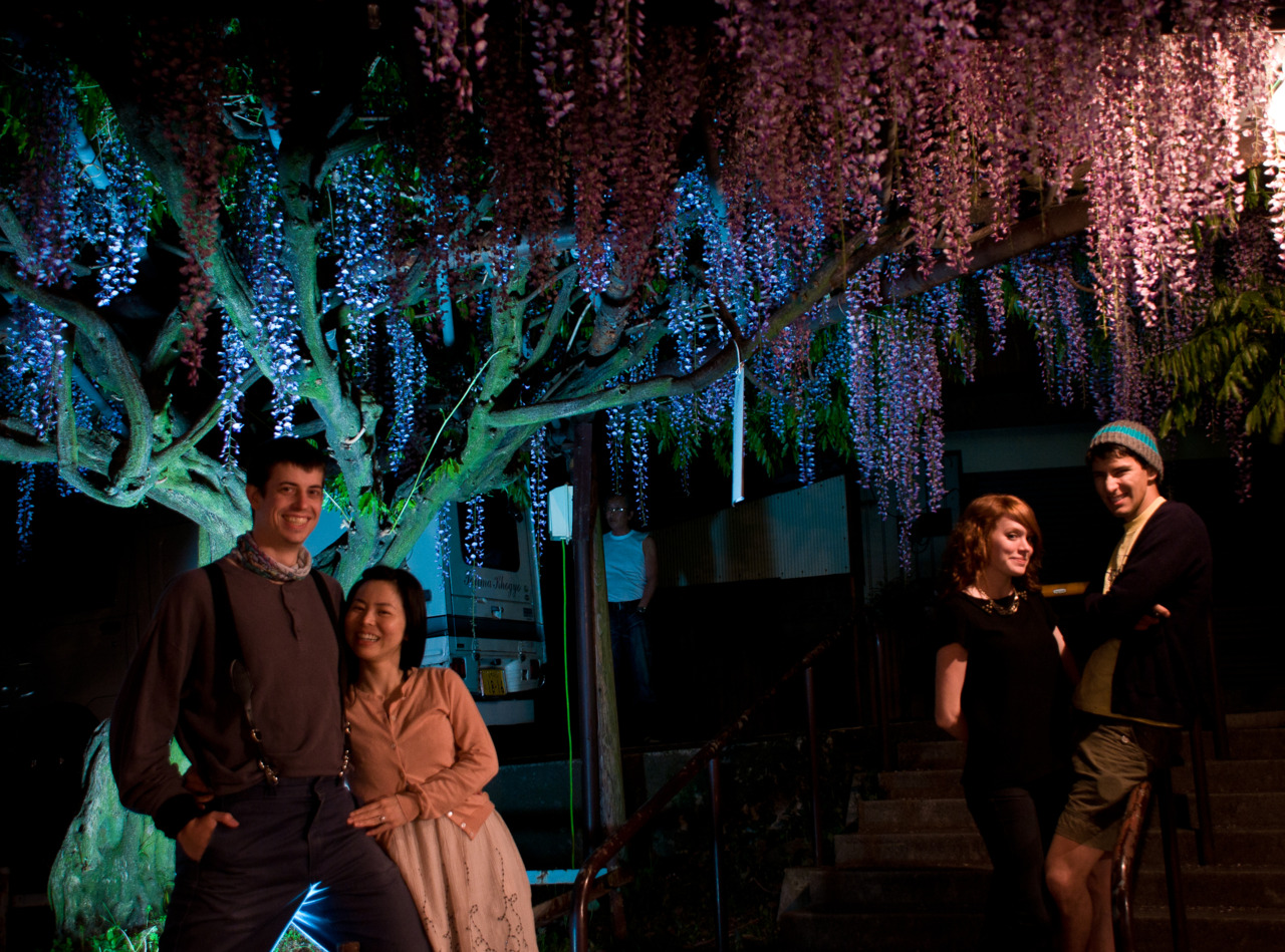 Night Time Wisteria Festival
