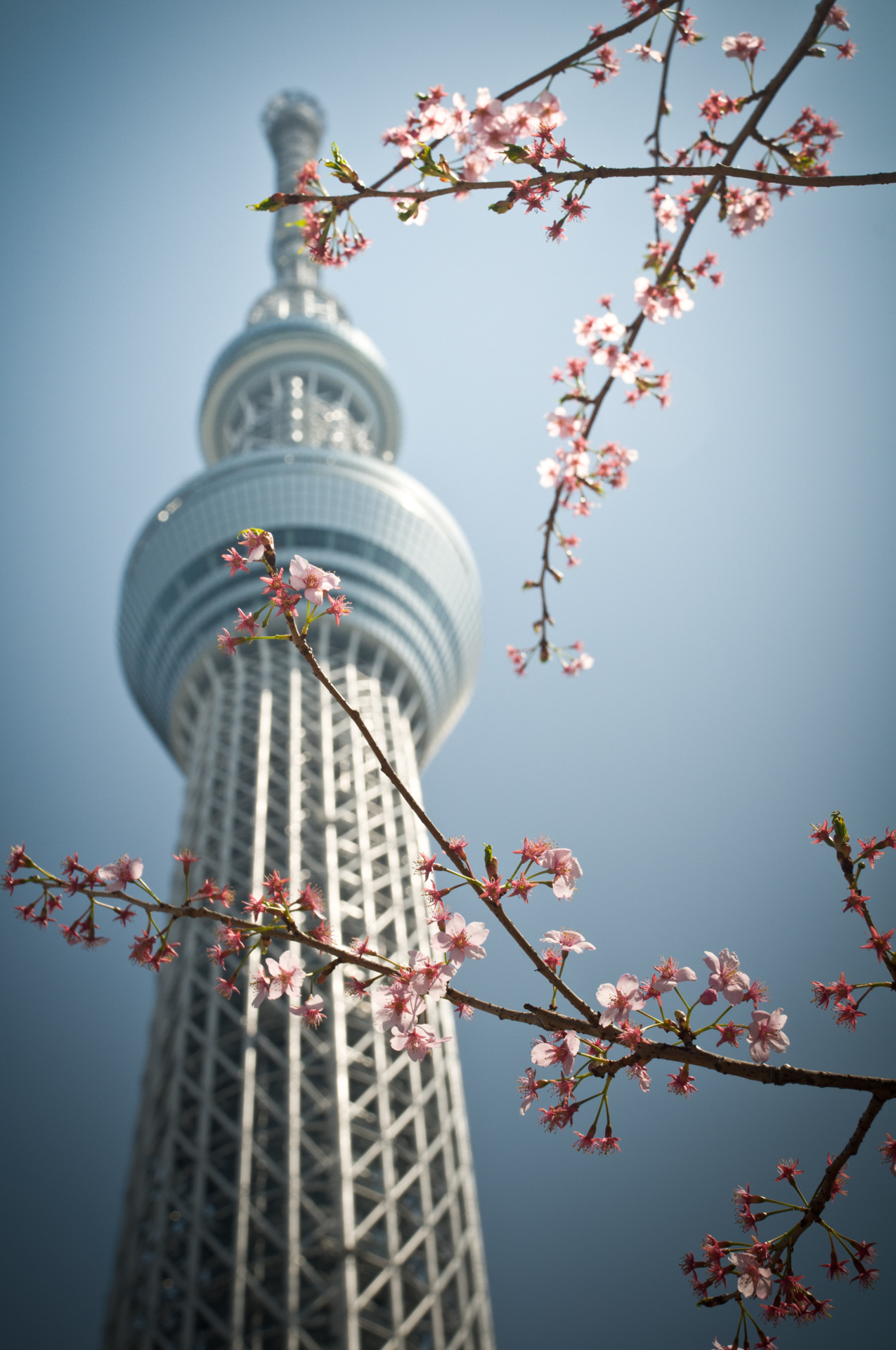 Tokyo Sky Tree! This gem claims the title of the 2nd tallest structure in the world.