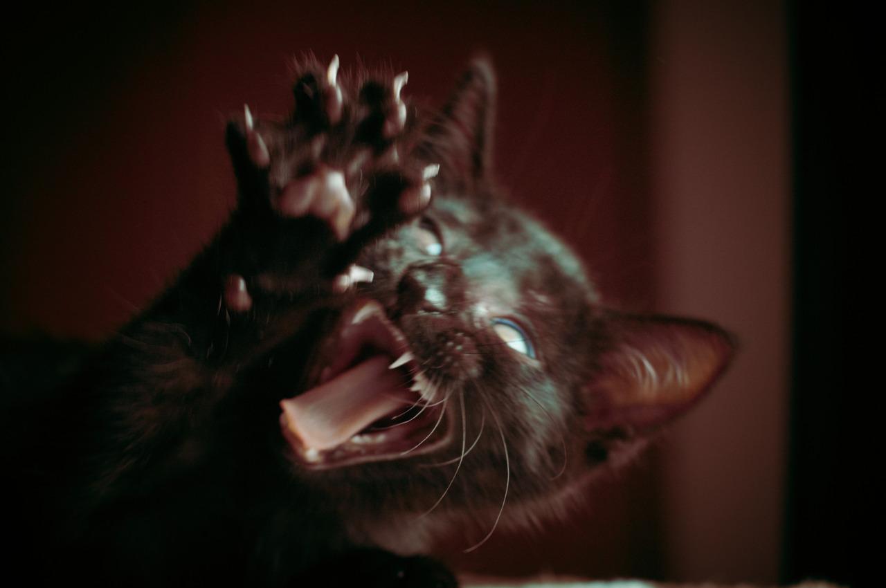 Halloween Cat!!!