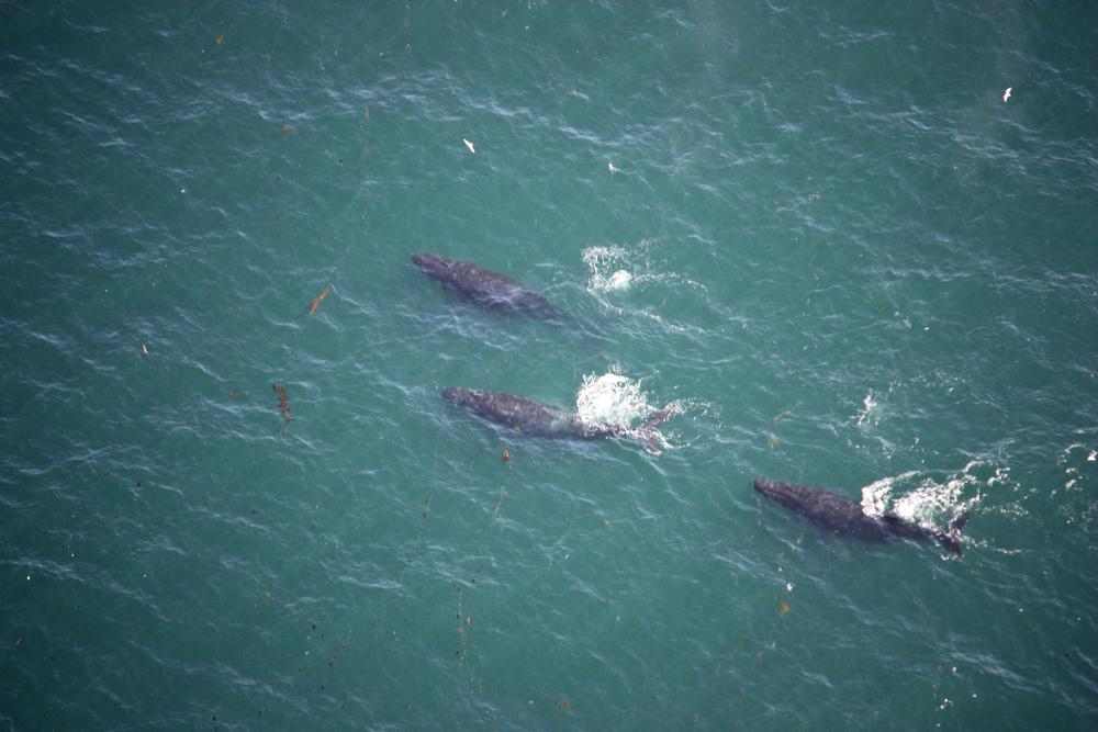 whales4.jpg