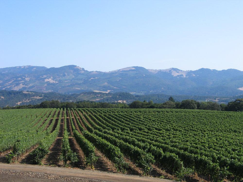 Sonoma Vineyard |  Glen Ellen, CA