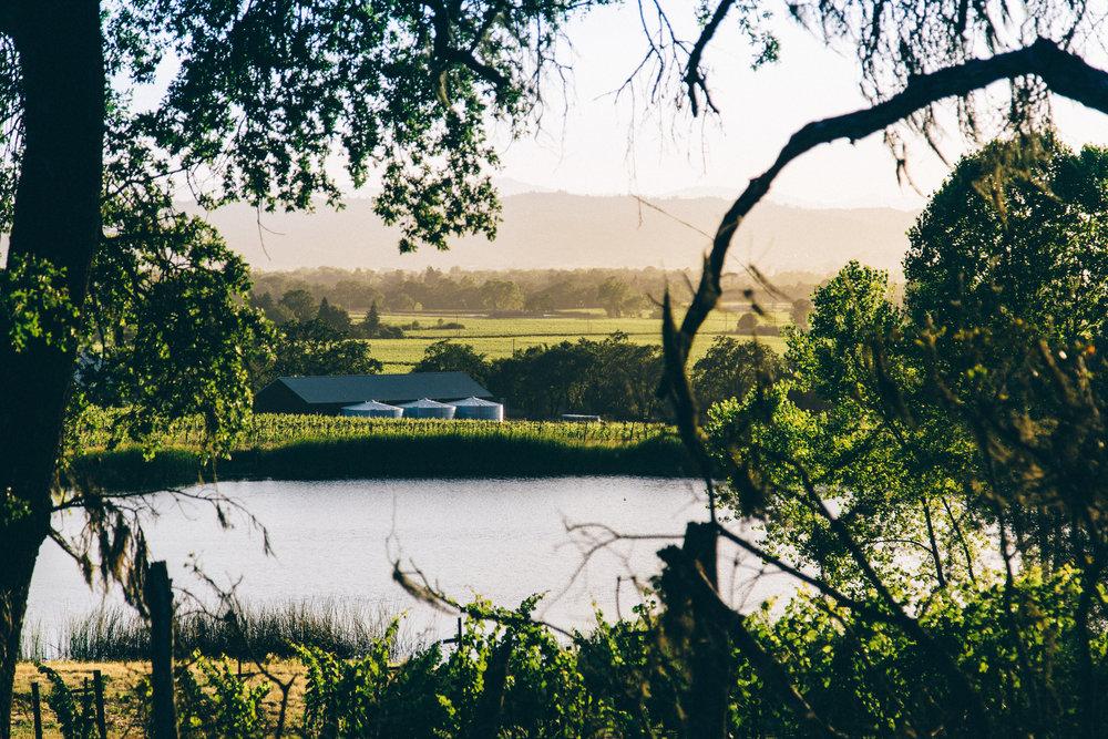 Silver Oak Winery  | Healdsburg, CA