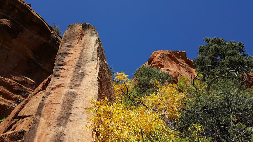 Palatki6_Sedona_Red_Rocks_fall_colors.jpg