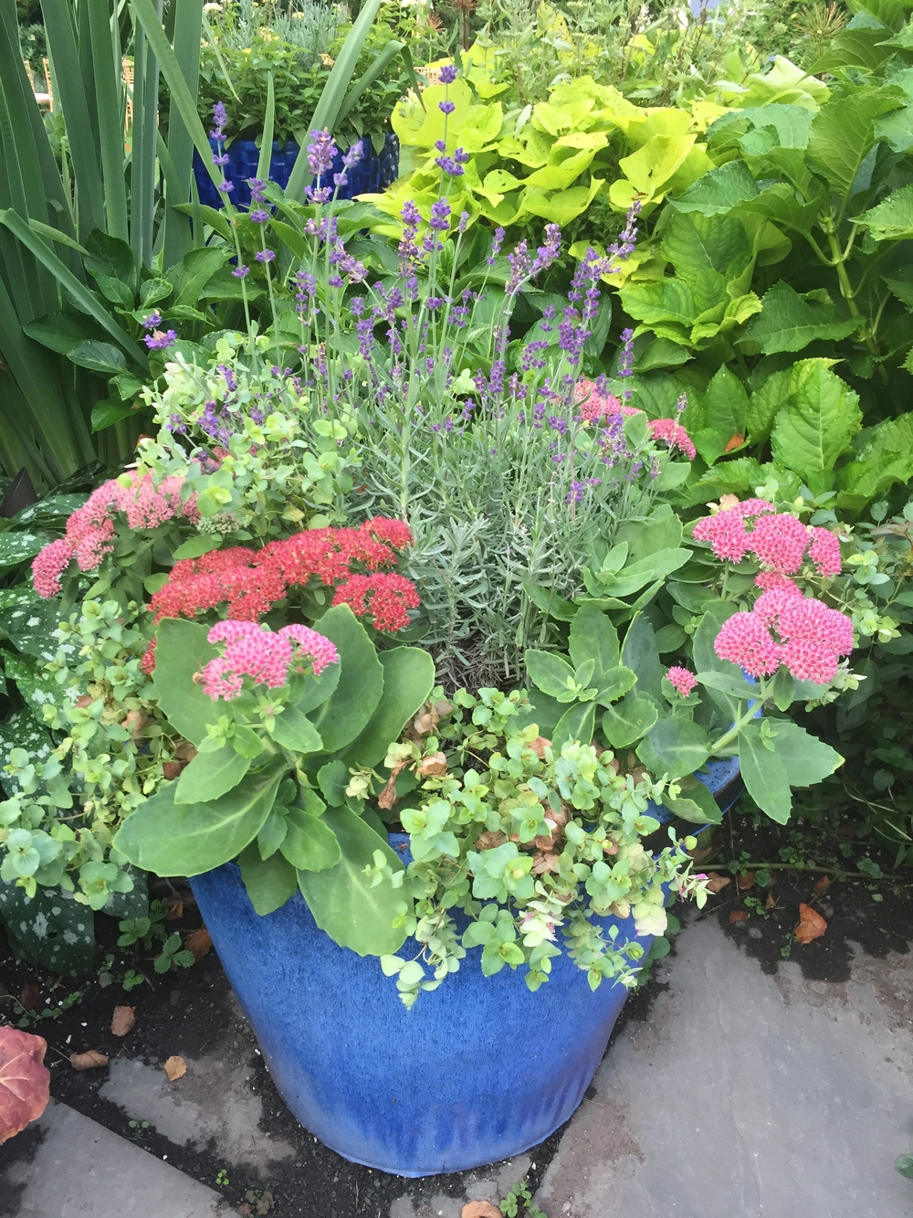 The Autumn Container Garden