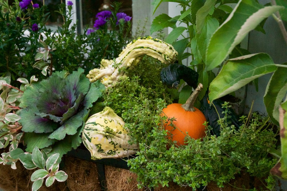 Gardening from the Autumn Equinox to the First Frost