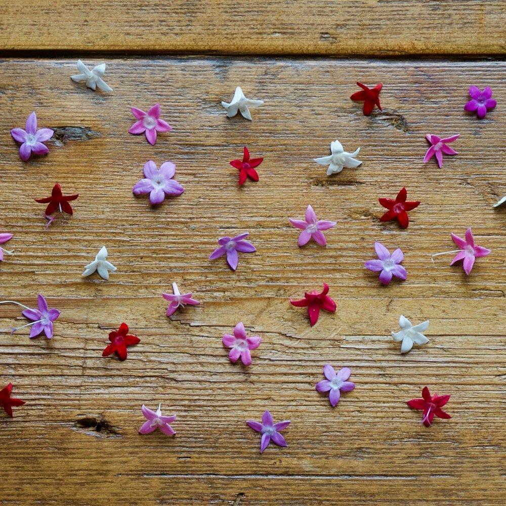 MICRO STAR FLOWER