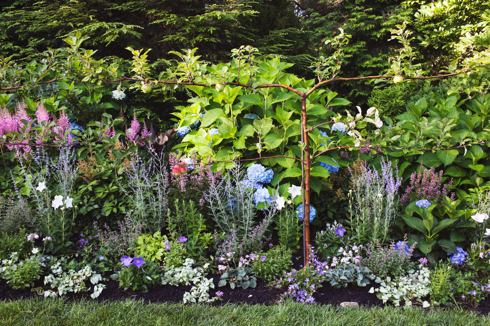 - With a house that sits on an old New England apple orchard, we inherited rich garden soil with amazing drainage. Other than some rock removal, aerating, and serious weeding, maintaining healthy dirt remains the primary focus.