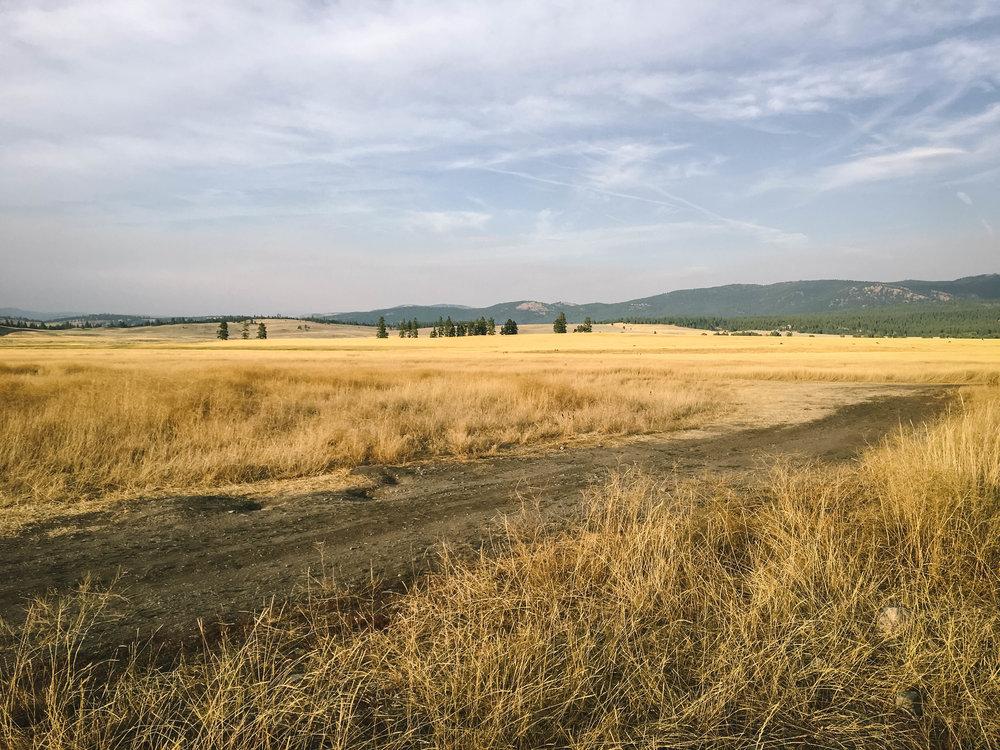 Montana_Weston_Table.jpg