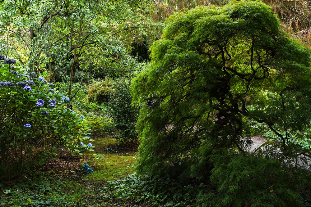 Mount_Usher_Gardens_Weston_Table.jpg