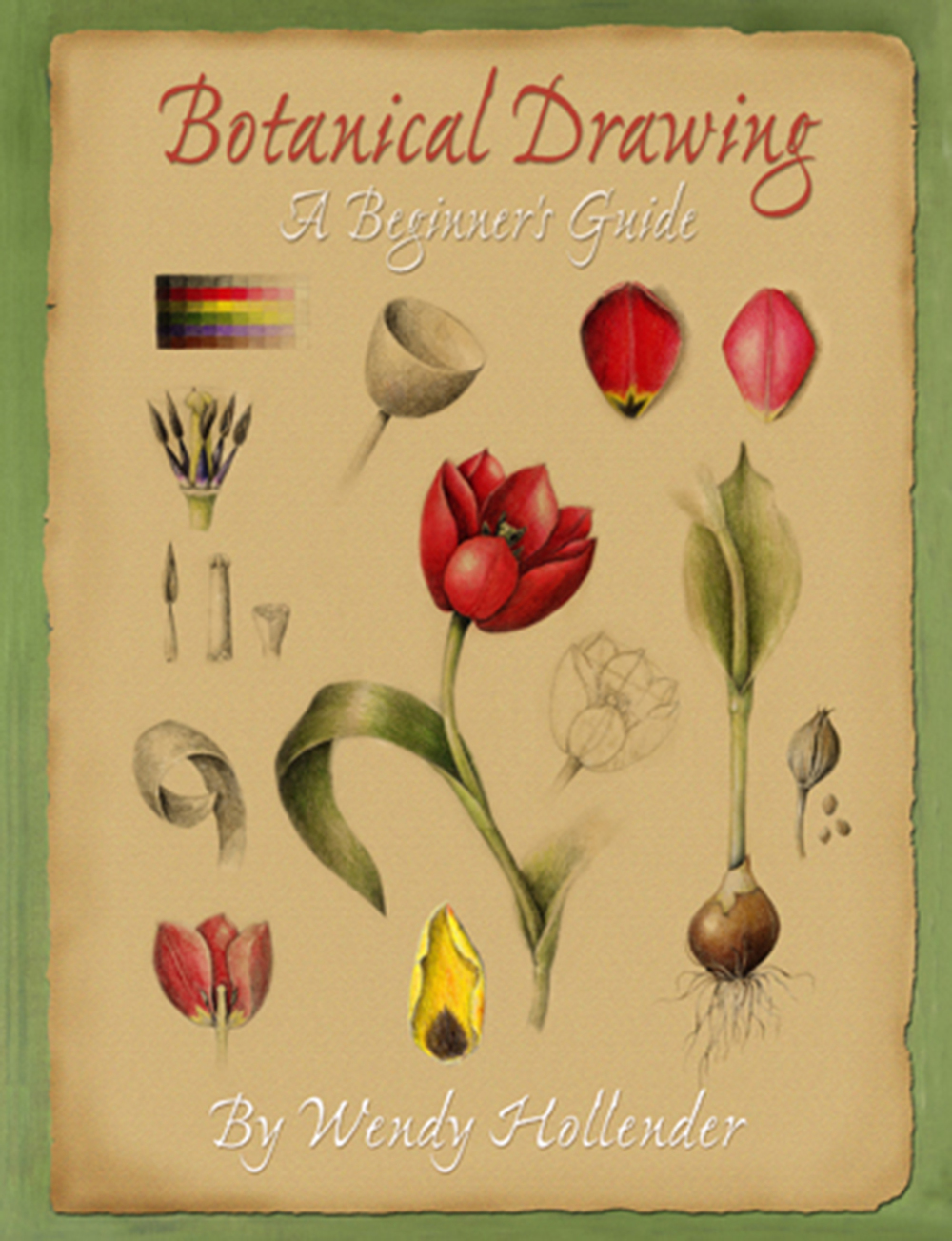 botanical drawing a beginner s guide new edition by wendy