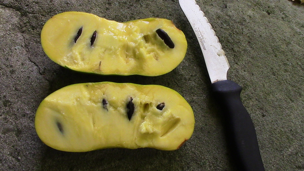 A view of the inside of the fruit.