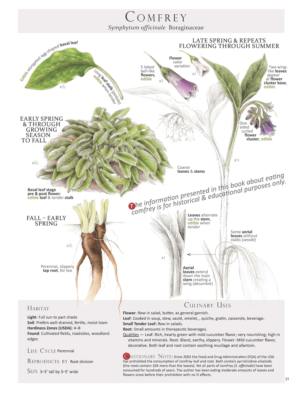 From the book Foraging & Feasting: A Field Guide and Wild Food Cookbook by Dina Falconi; illustrated by Wendy Hollender .