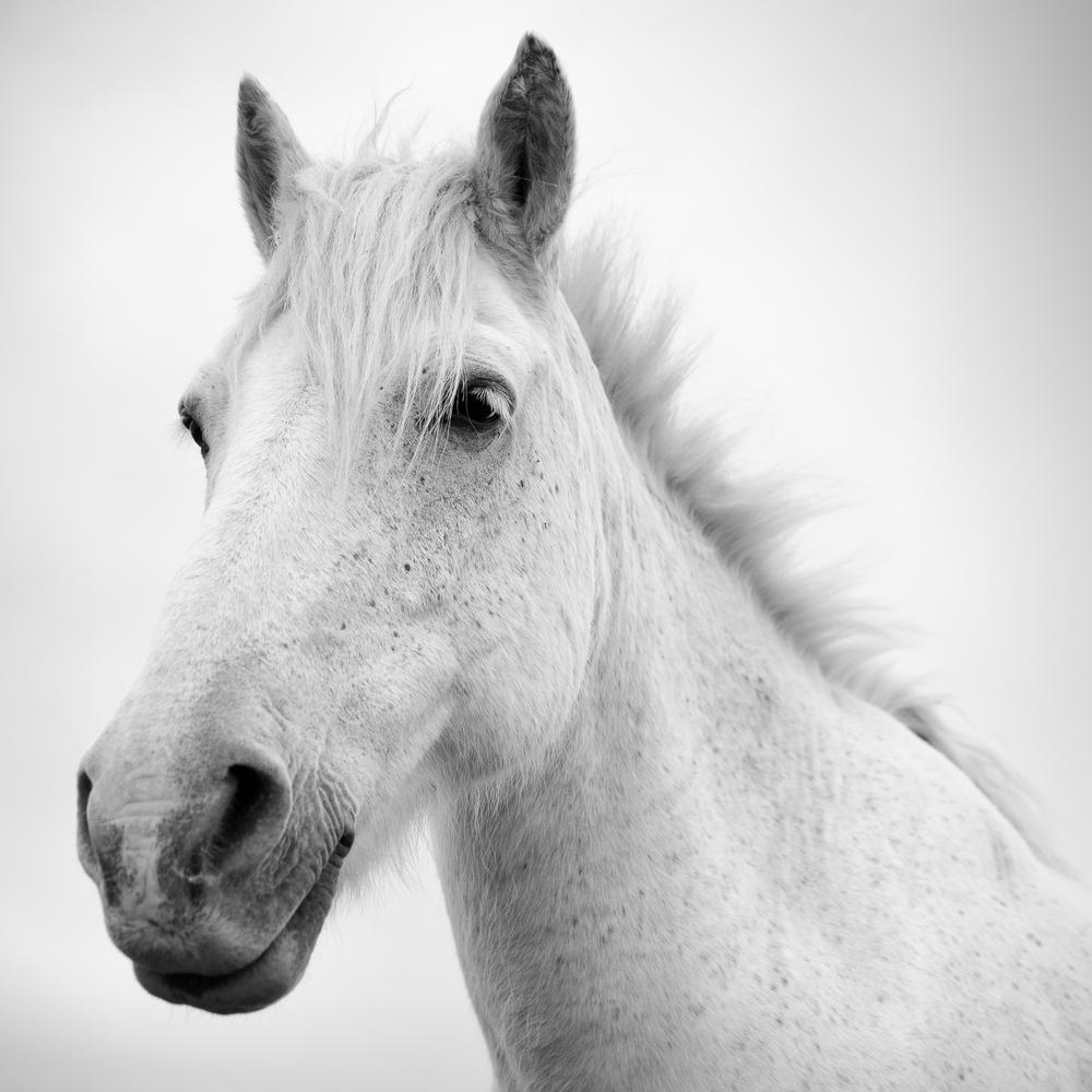 horse (2 of 2).jpg