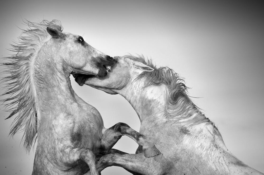 horsesoctober (9 of 10).jpg