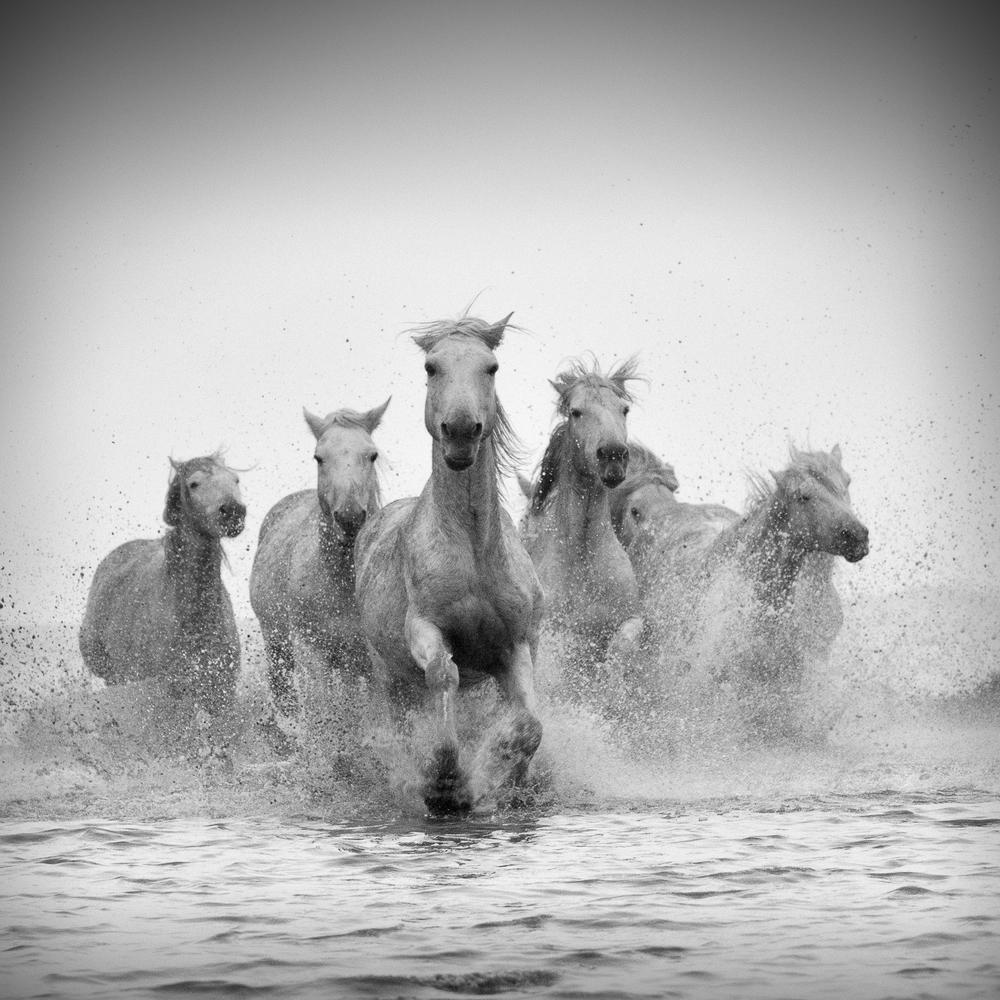 horsesoctober (5 of 10).jpg