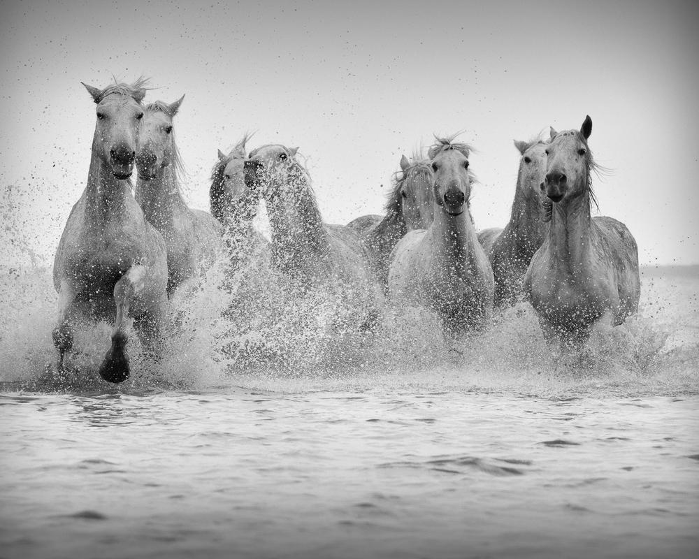 horsesoctober (6 of 10).jpg
