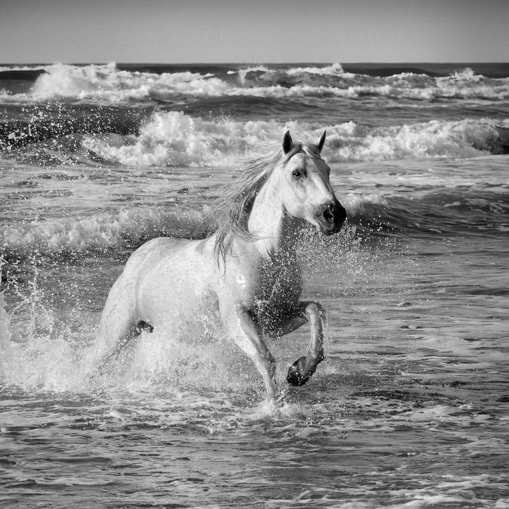 horsesoctober (3 of 10).jpg