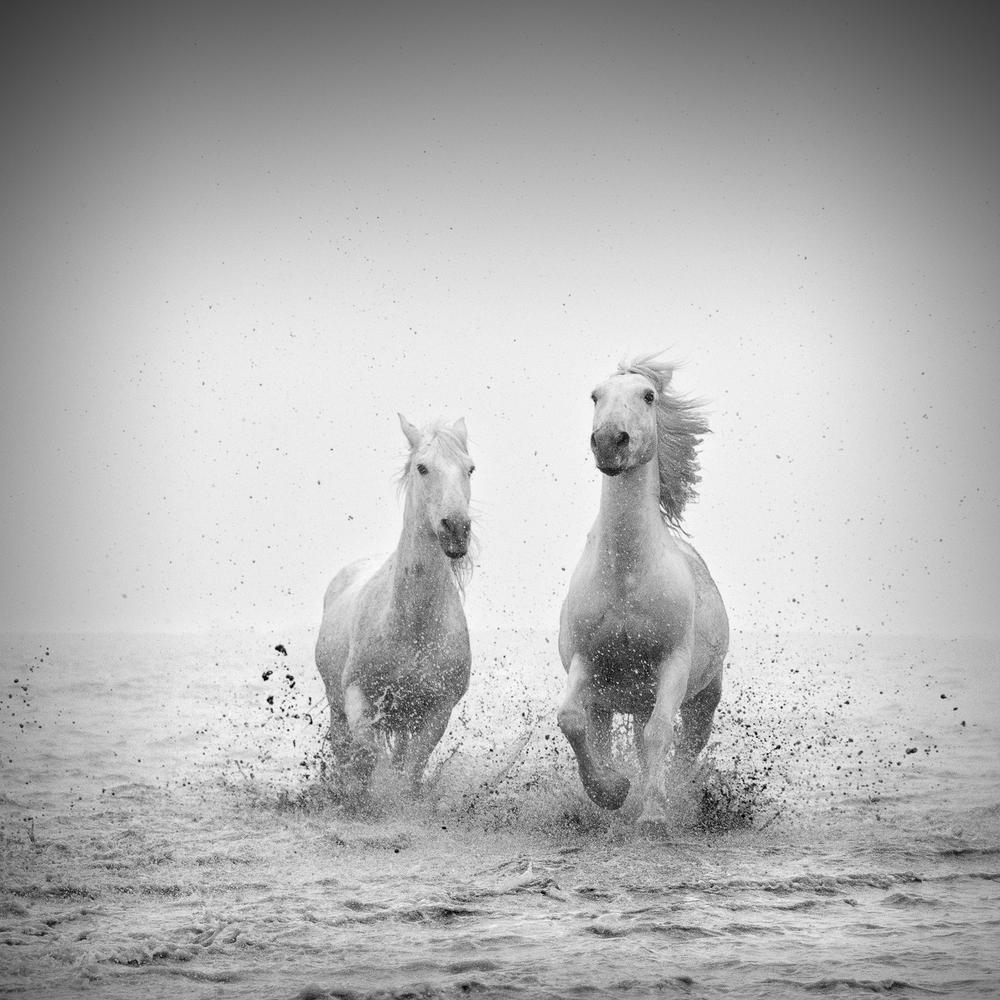 horsesoctober (4 of 10).jpg