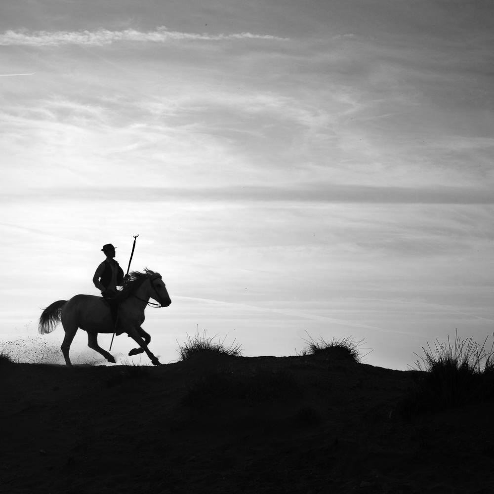 horsesoctober (1 of 10).jpg