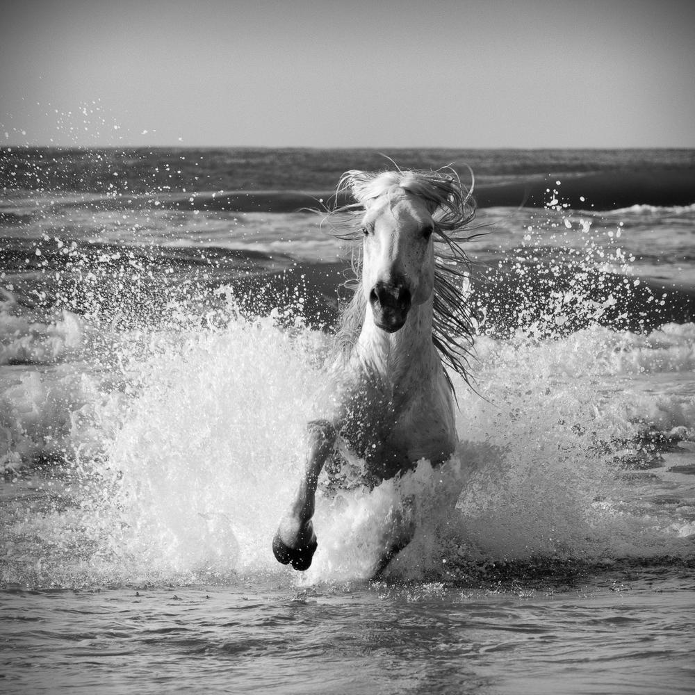 horsesoctober (2 of 10).jpg