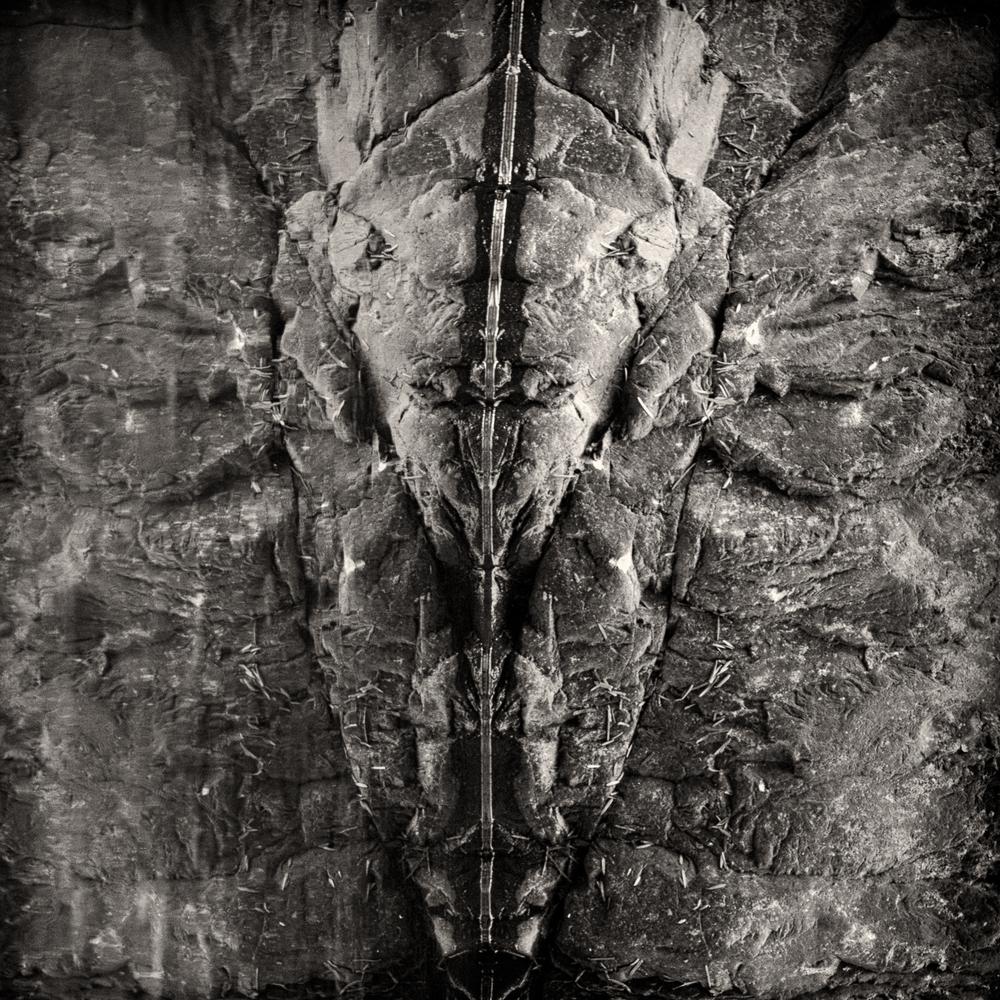 aliens (10 of 4).jpg