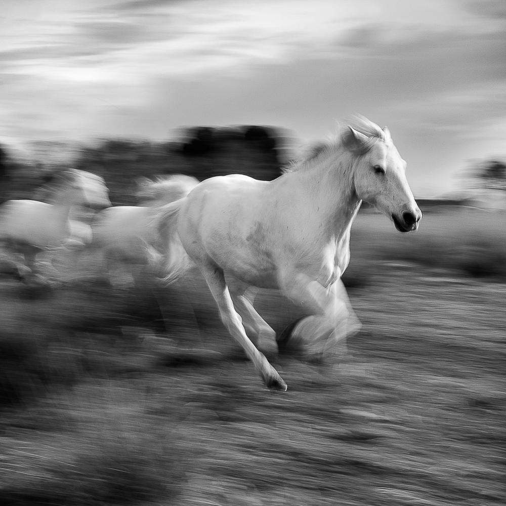white_horse (6 of 2).jpg