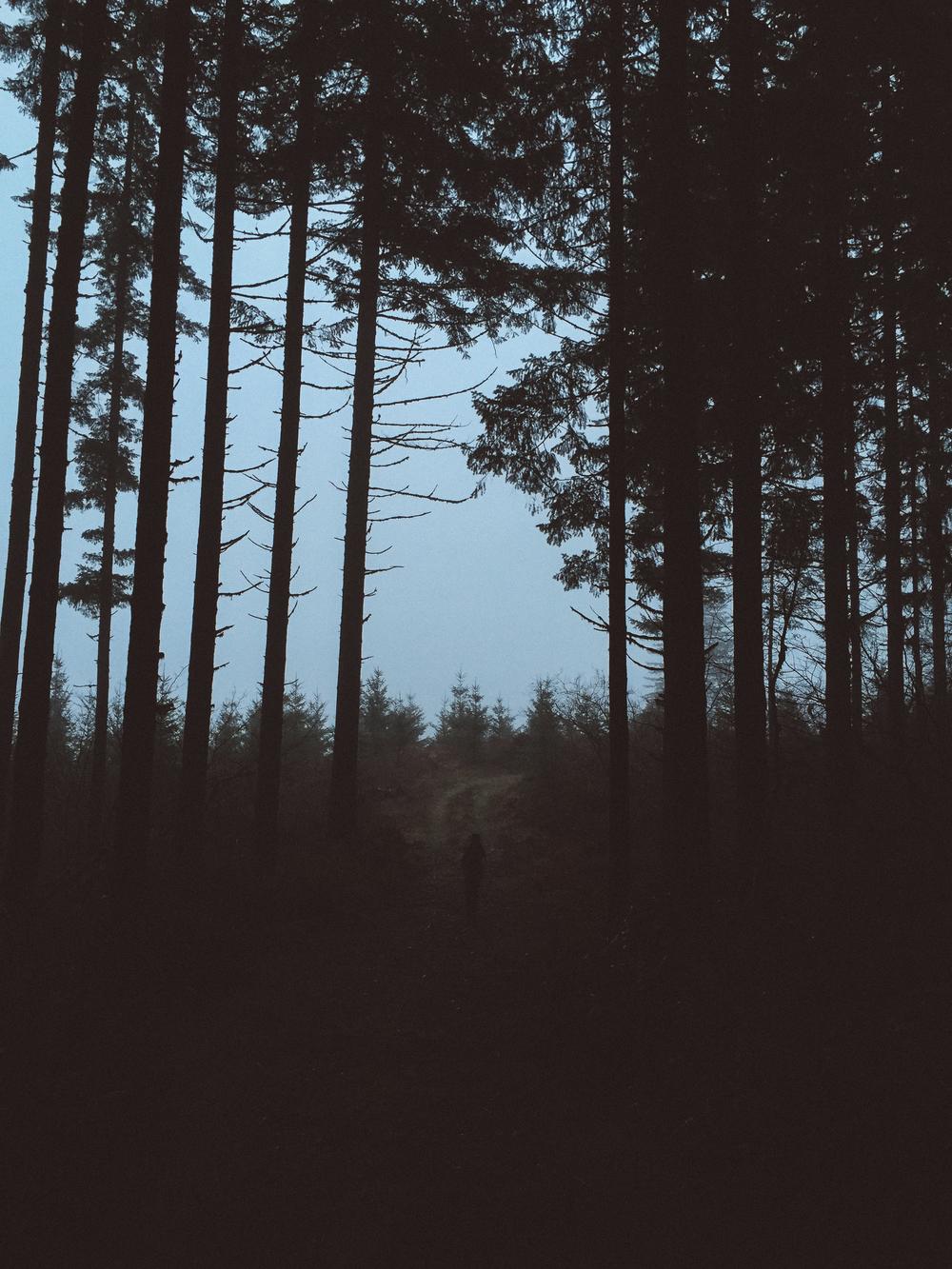 Big woods.