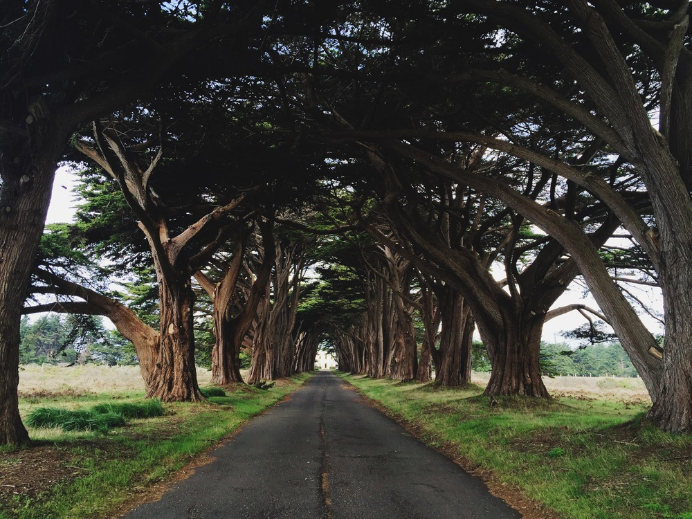 Tree Tunnel.