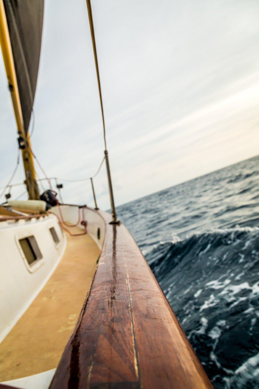 Bufflehead Sailing