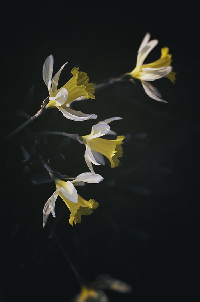 Nature_Detail_Flower007.jpg