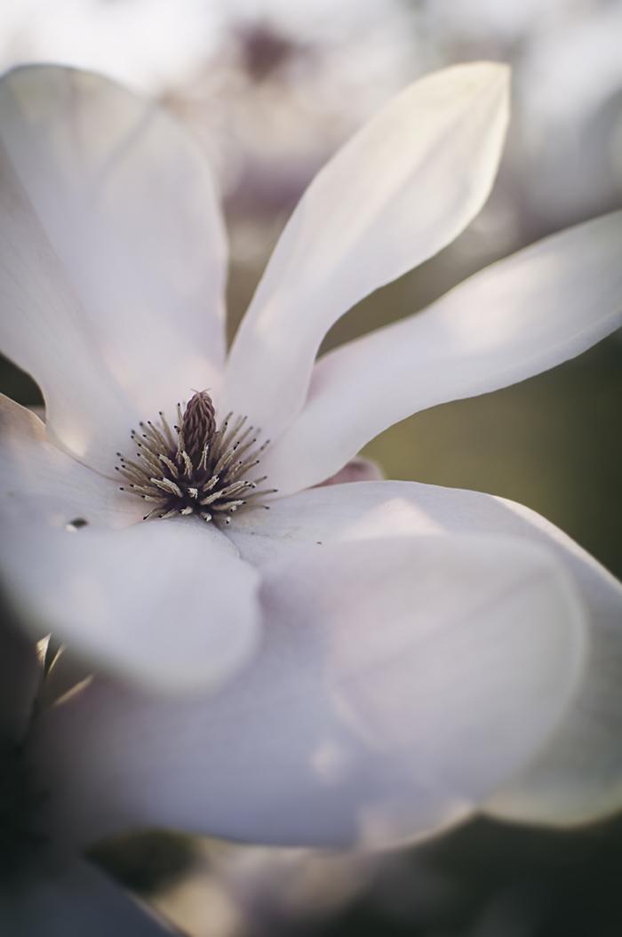 Nature_Detail_Flower008.jpg