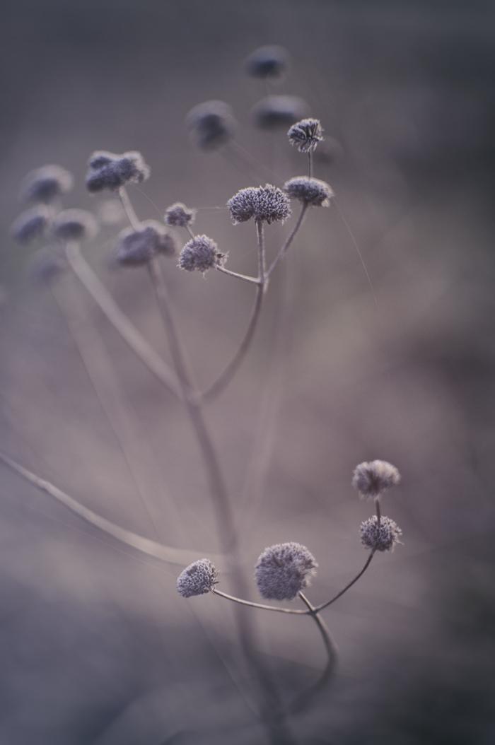 Nature_Detail_Prairie004.jpg