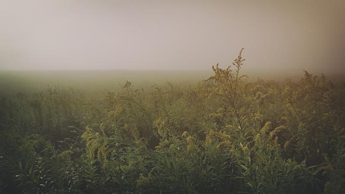 Landscape_Field005_mobile.jpg