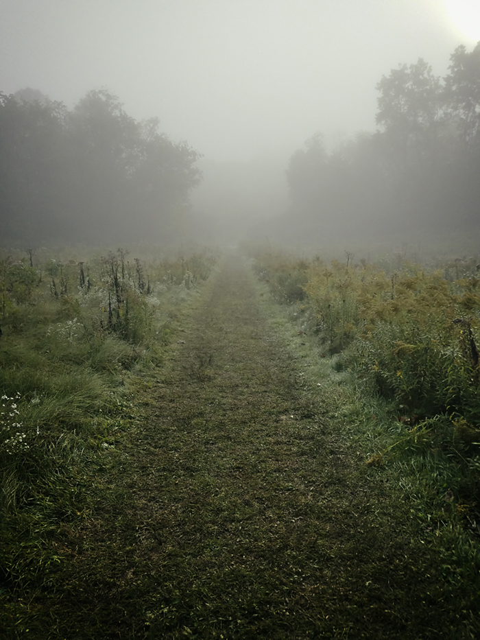 Nature_Landscape_Path001_Mobile.jpg