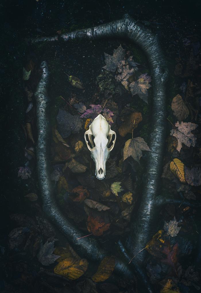 Skull_coyote001.jpg