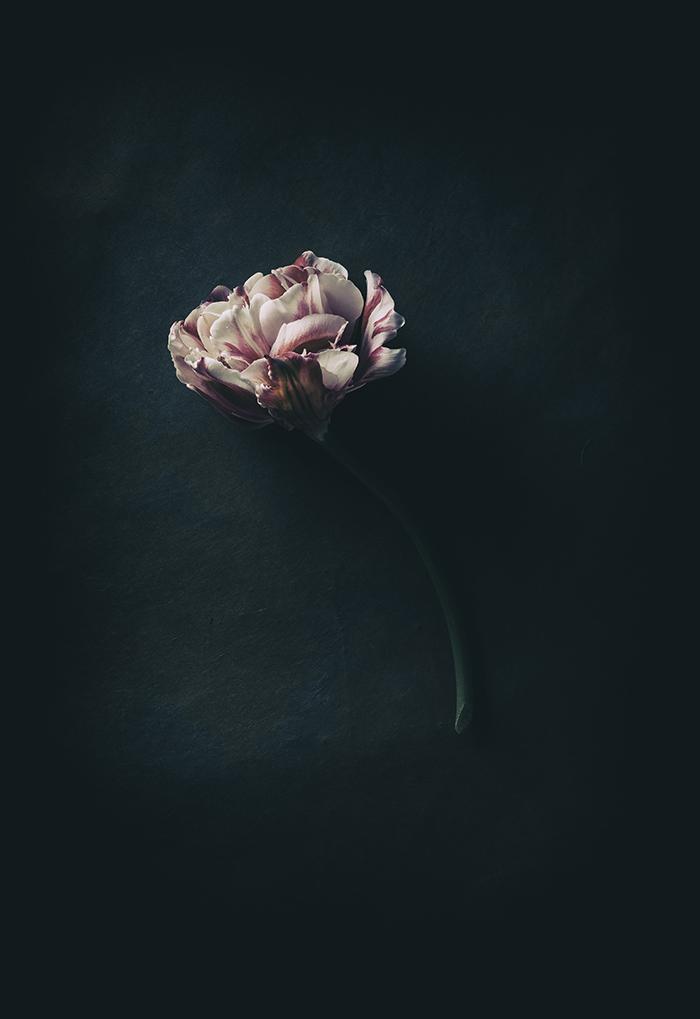 Nature_Detail_Flower018.jpg