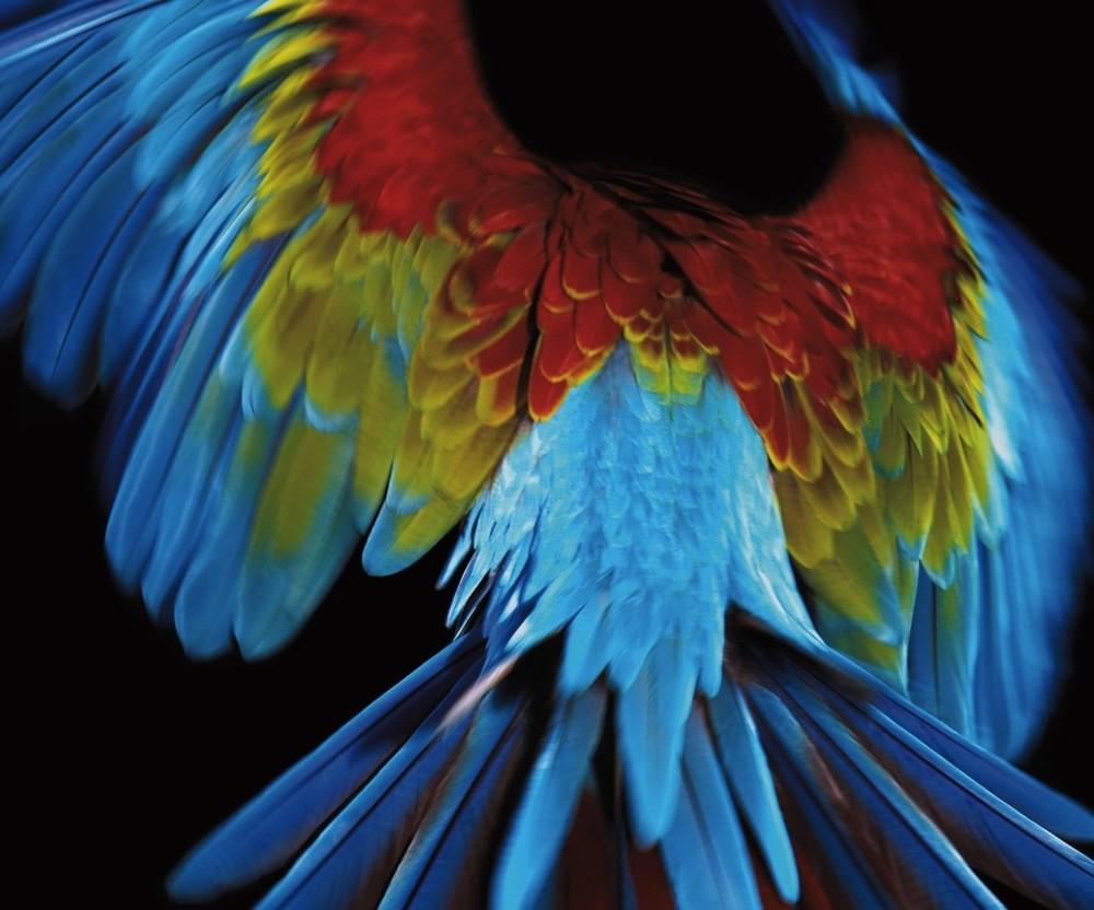macaw-1024x852.jpg