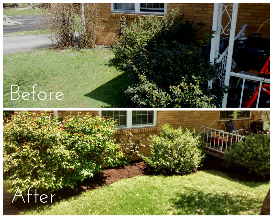 My main task at this property was to mulch around the shrubbery. Because the shrubs had outgrown their old bed, I edged further out to create a larger bed, which should make mowing much easier! I also lightly pruned the shrubs away from the home.